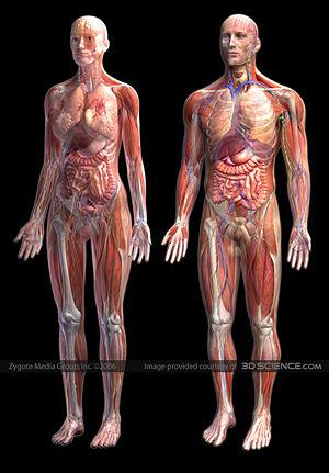 Diagram Anatomi Manusia Bagustris Wordpress